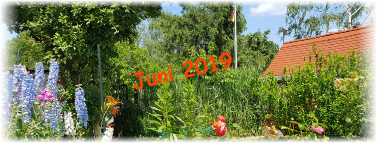 Der Juni - Impressionen 2019 in der Morgensonne