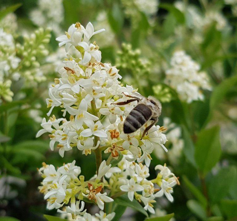 Bienen- und Insektenhotel mit Buchungsgarantie