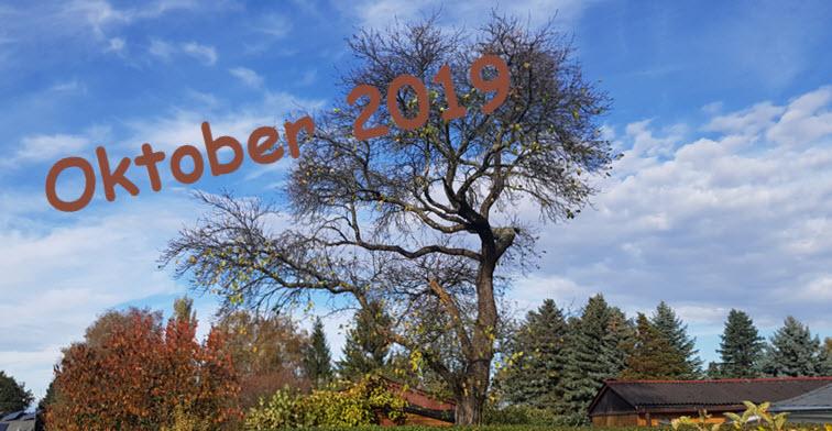 Der Oktober – Impressionen 2019 in der Morgensonne