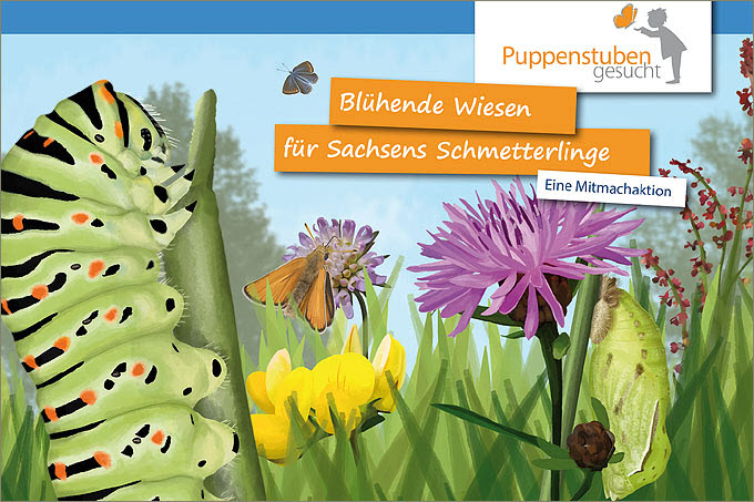 Online Workshop Schmetterlingswiesen