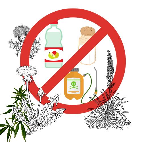 Pflege der Wege im Kleingarten – Welche Mittel sind erlaubt!