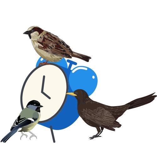 """Der Vogel Wecker –  """"Des einen Leid ist des anderen Freud."""""""